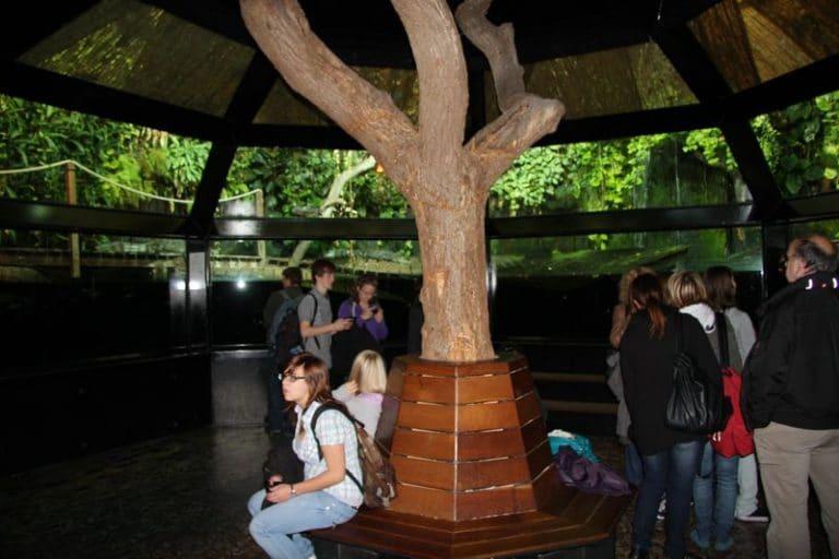 Das Meeresmuseum Nausicaá in Boulogne - ein Blick in die Tiefen des Meeres